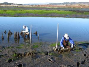 oysterwork